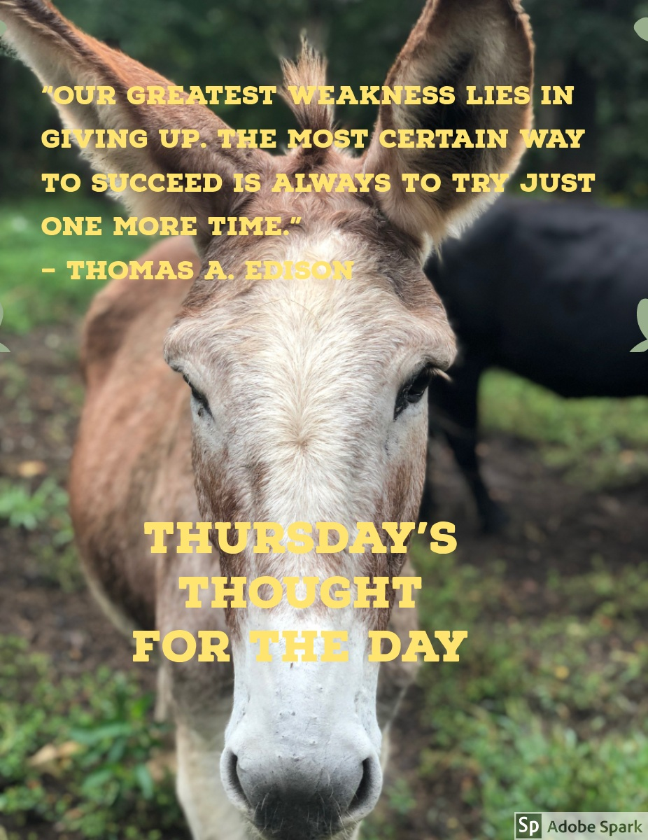 """Thursday's Thought <BR>for the Day Thursday's Thought <BR>for the Day<P>""""Our greatest weakness lies in giving up. The most certain way to succeed is always to try just one more time.""""<BR><BR>– Thomas A. Edison"""