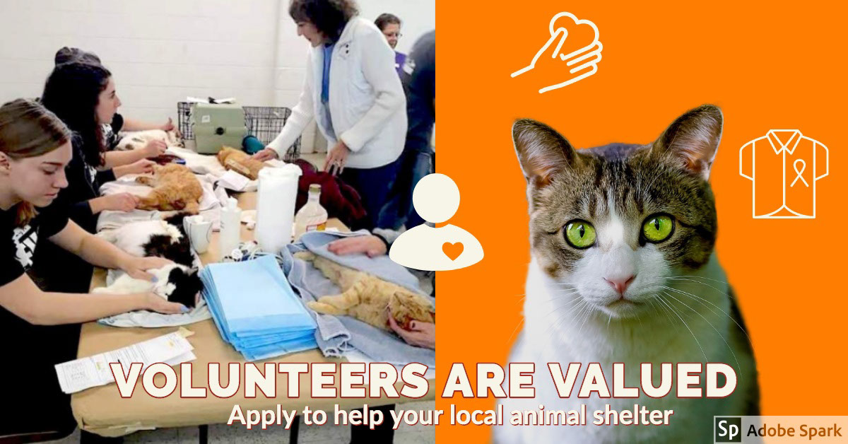VOLUNTEERS ARE VALUED VOLUNTEERS ARE VALUED<P>Apply to help your local animal shelter