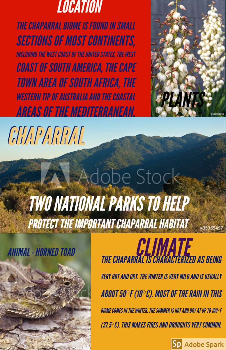 CHAPARRAL CHAPARRAL<P>CLIMATE<P>PLANTS<P>LOCATION<P> Two National Parks to help protect the important chaparral habitat<P>The chaparral biome is found in small sections of most continents, including the west coast of the United States, the west coast of South America, the Cape Town area of South Africa, the western tip of Australia and the coastal areas of the Mediterranean.<P>Animal - Horned Toad<P>The chaparral is characterized as being very hot and dry. The winter is very mild and is usually about 50°F (10°C). Most of the rain in this biome comes in the winter. The summer is hot and dry at up to 100°F (37.5°C). This makes fires and droughts very common.