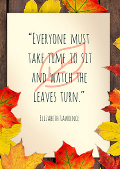 """""""Everyone must take time to sit and watch the leaves turn."""" Autumn"""