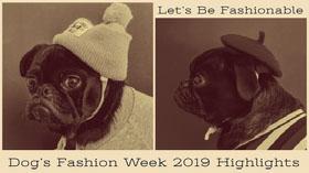 Dog's Fashion Week 2019 Highlights