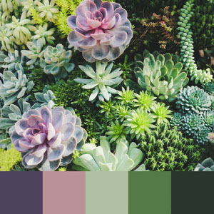Color Palettes | Earthy 9 101 Brilliant Color Combos