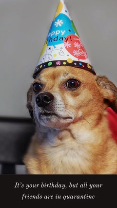 birthday meme instagram story Pets