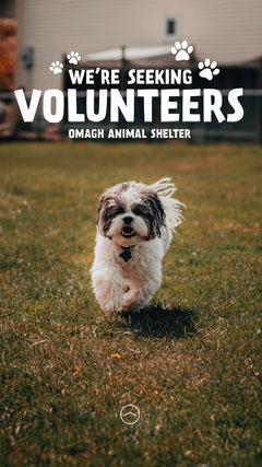 Dogs Seeking Volunteer Animal Shelter Instagram Story Volunteer