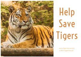 Help Save Tigers  Ansichtkaart