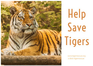 Help Save Tigers  Cartolina di viaggio