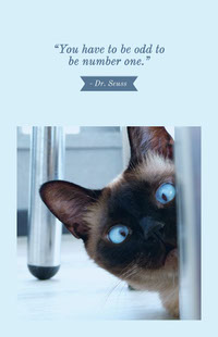 Blue With Cat Quote Poster 사진 편집기