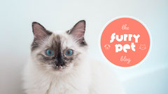 Salmon Furry Pet Cat Blog Banner Cat