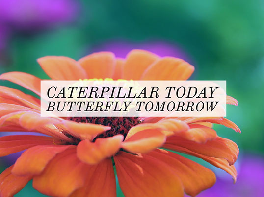 GG Example project: caterpillar today butterfly tomorrow
