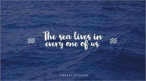 The sea lives in Desktop Wallpaper