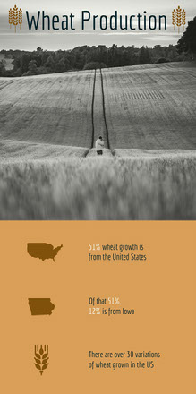 Brown Wheat and Agriculture Infographic with Picture of Field Infografica