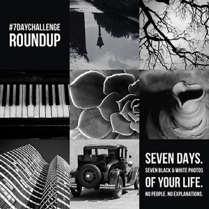 Black And White Seven Day Challenge Roundup Instagram Post  Tumble Collage