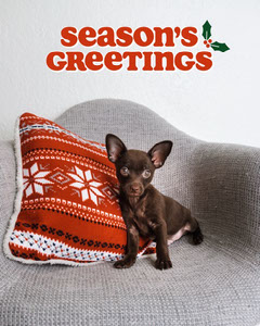 Cute Red and Green Season's Greetings Holiday Photo Message Holiday Party Flyer
