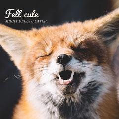 Cute Fox Instagram Square Meme Animal