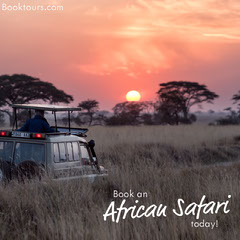 African Safari Travel and Tourism Instagram Square Ad with Savanna at Sunset Travel Agency