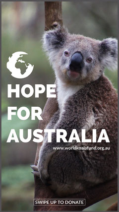 koala donations for bushfires in Australia Instagram post Animal