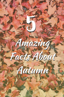 Orange and White 5 Amazing Facts About Autumn Pinterest