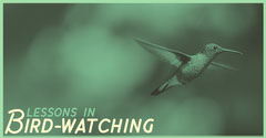 Green Bird Watching Lesson Facebook Post Graphic with Hummingbird Bird