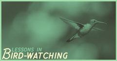 Bird-watching Bird