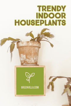 Green and Brown Houseplant Pinterest Post Graphic Plants
