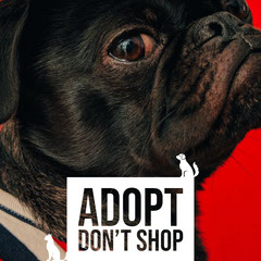 ADOPT DON'T SHOP Dog Adoption Flyer