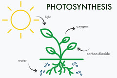 Photosynthesis Biology Flashcard with Plant and Sun Sun