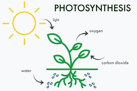 Photosynthesis Biology Flashcard with Plant and Sun Study Helpers