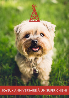 top dog birthday cards  Carte d'anniversaire