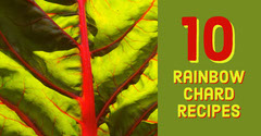 Green and Red Vegetable Recipe Facebook Post Graphic Rainbow