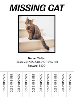 Simple Missing Cat Poster With Phone Number Tearaways Missing Posters