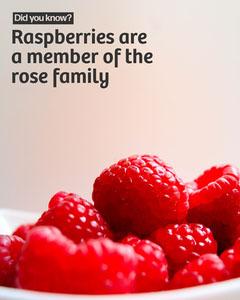 Did you know Raspberries IG Portrait Fruit