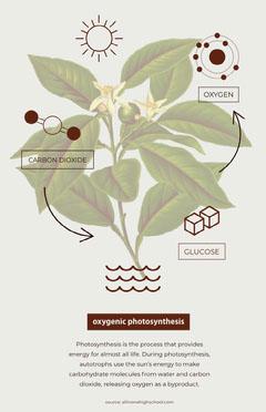 poster Plants