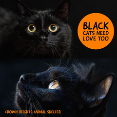 Animal Shelter Side By Side Collage Cat