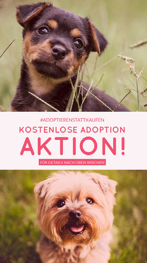 Kostenlose Adoption<BR> Aktion! Instagram Storys