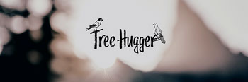 Light, Bright Toned Minimalistic Tree Hugger Twitter Header Twitter Image Size