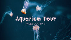 Underwater Jellyfish Aquarium Tour Live Stream Facebook Post  Stream