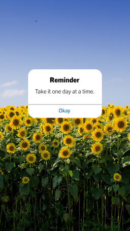 sunflower fields flowers reminder cute message instagram story