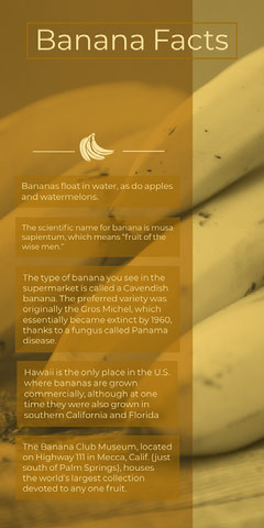 Yellow Banana Facts Infographic Fruit