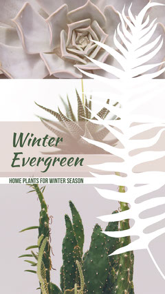 Winter Houseplant Instagram Story with Collage Cactus