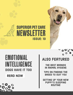 Yellow & Grey Dog Paw Print Newsletter Pets