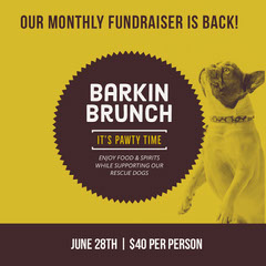 Yellow and Black Barkin Brunch Event Instagram Graphic Brunch