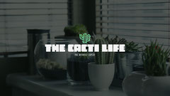 Modern Style Cactus Growing and Plant Care Youtube Channel Art Plants