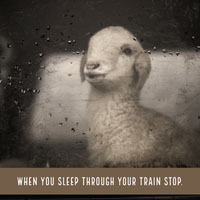 Sleeping on Train Meme with Sheep Meme