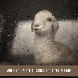 Sleeping on Train Meme with Sheep Meme