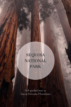 Brown Sequoia National Park Travel and Tourism Pinterest Graphic with Forest Hike