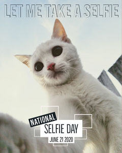 Blue With Portrait Of White Cat Selfie Day Social Post Cat