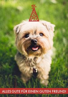 top dog birthday cards  Geburtstagskarte