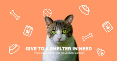 GIVE TO A SHELTER IN NEED Cat