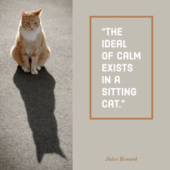 """The ideal of calm exists in a sitting cat."" Cat"