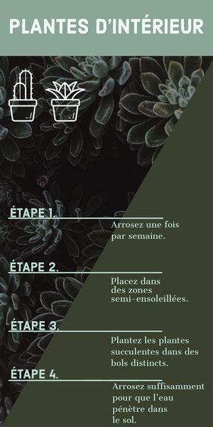 PLANTES D'INTÉRIEUR Infographisme